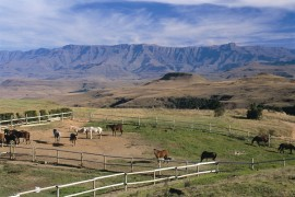 Horses and the view at Little Switzerland Resort